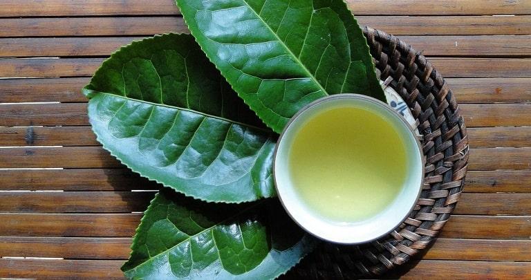 Lá chè xanh giúp kháng khuẩn, chống viêm hiệu quả