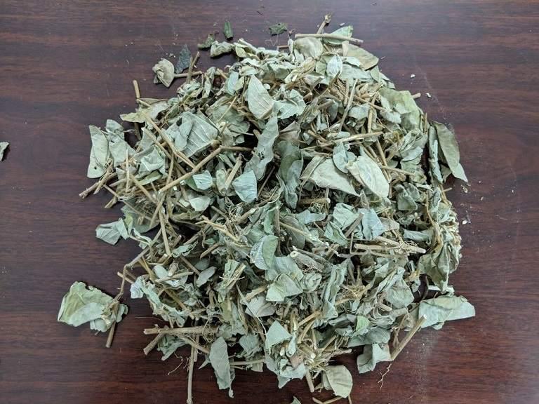 Kim tiền thảo xuất hiện trong bài thuốc Đông y trị sỏi thận