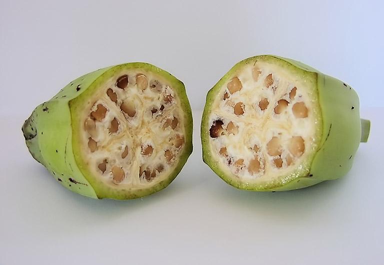 Công dụng trị bệnh của chuối hột đã được kiểm chứng trong dân gian