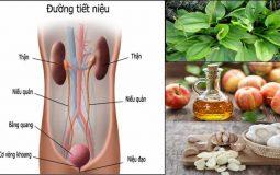 11 cách chữa viêm đường tiết niệu tại nhà an toàn và hiệu quả nhất