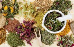 Điều trị sỏi thận bằng thuốc Đông y: Top 6+ bài thuốc hiệu nghiệm nhất
