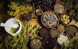 Top 7 bài thuốc Đông y trị sỏi mật an toàn & hiệu quả lâu dài