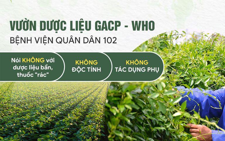 Vườn dược liệu đạt chuẩn GACP - WHO đảm bảo an toàn trong điều trị ở trẻ nhỏ