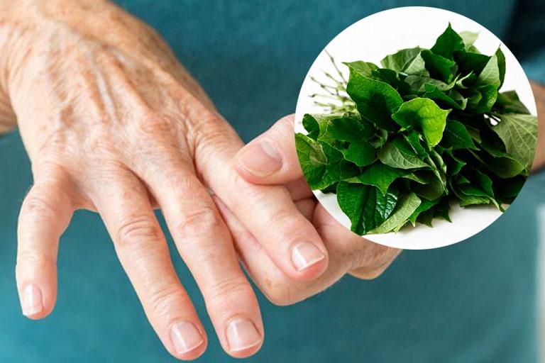Lá lốt là thảo dược hay được sử dụng trong điều trị các bệnh về xương khớp