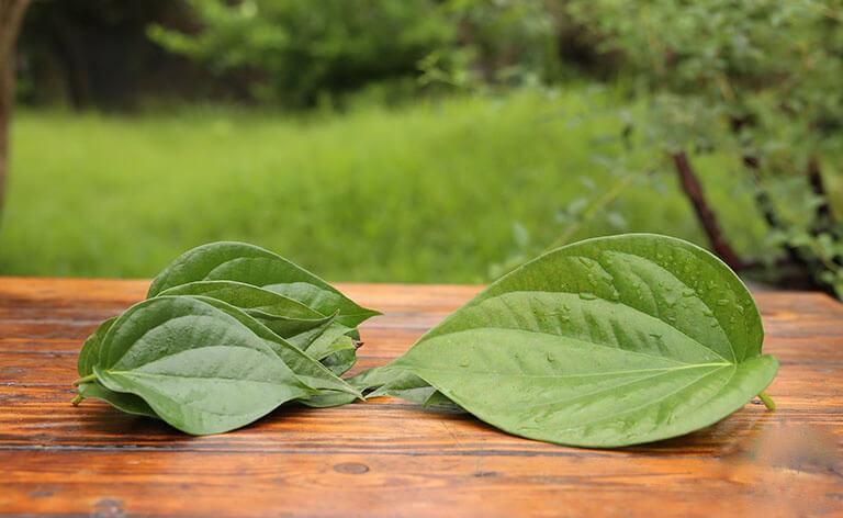 Mẹo chữa viêm đường tiết niệu sau sinh bằng lá trầu không