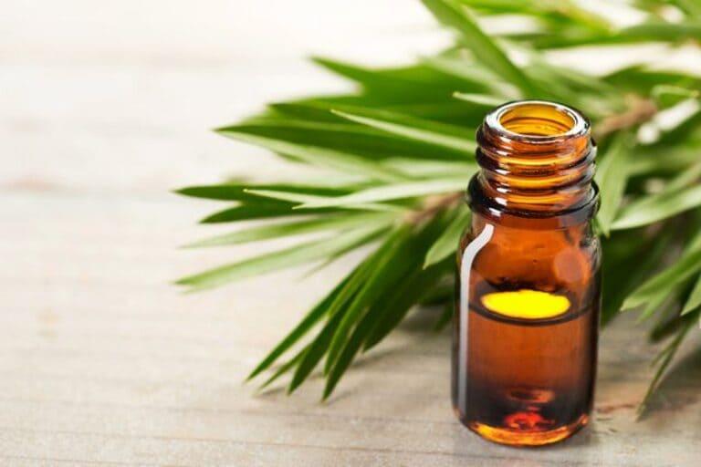 Tinh dầu tràm pha nước gội đầu hàng ngày có tác dụng làm giảm viêm nhiễm