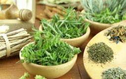 Top 13 bài thuốc Nam chữa tiểu buốt hiệu quả ngay tại nhà
