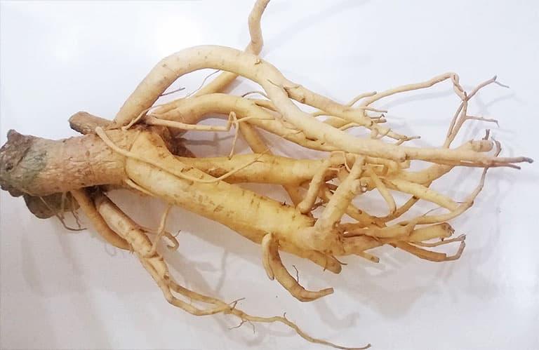 Bài thuốc rễ đinh lăng ngâm rượu giúp giảm đau nhức hiệu quả ở người bệnh thoát vị nội xốp