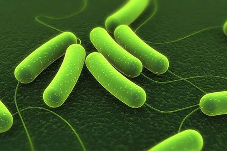 Vi khuẩn Hp có thể phá hủy niêm mạc dạ dày