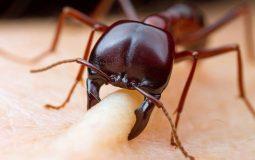 Viêm da tiếp xúc côn trùng: Dấu hiệu nhận biết, cách điều trị và giải pháp phòng ngừa