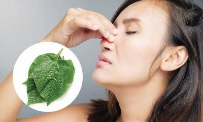 Tham khảo những cây thuốc chữa bệnh viêm xoang hiệu quả và an toàn nhất