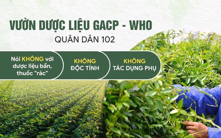 Thuốc được thu hái từ những vườn biệt dược đạt chuẩn GACP-WHO