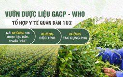 Quân dân 102 phát triển các vườn dược liệu sạch, chuẩn GACP - WHO