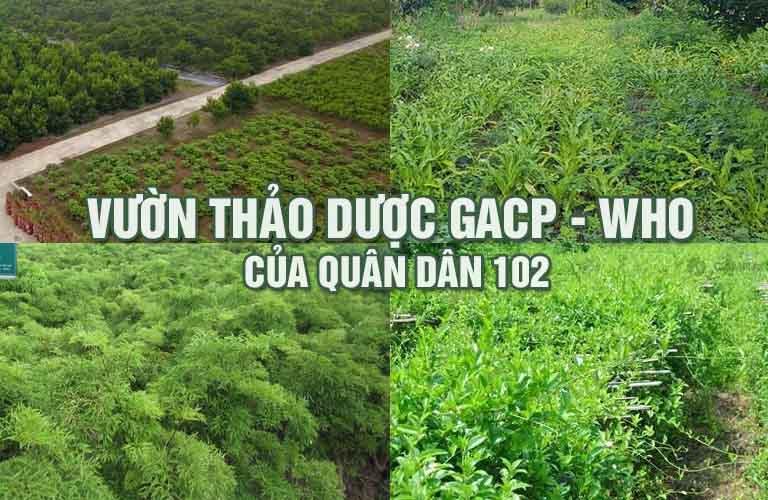 Vườn dược liệu tiêu chuẩn GACP-WHO của Bệnh viện